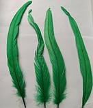 Перо петуха Натуральное Цвет Зеленый 20-30см, фото 6