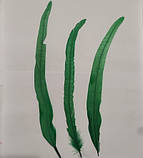 Перо петуха Натуральное Цвет Зеленый 20-30см, фото 8