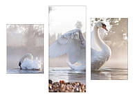 """Фотокартина """"Лебедь"""""""