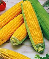 Семена кукурузы Сингента Фалькон ФАО 220