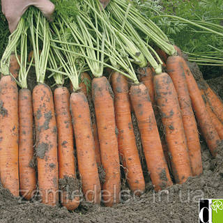 Семена моркови Наполи F1 25000 семян (1,8-2,0 мм) Bejo