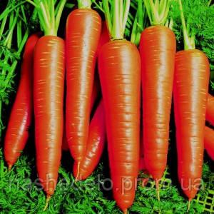 Семена моркови Вита Лонга 50 грамм Bejo