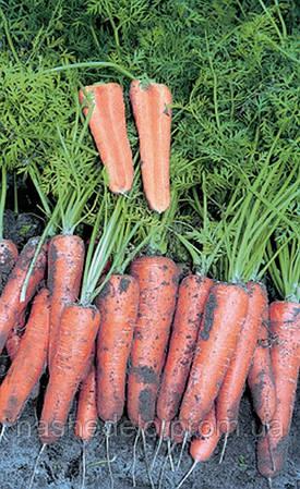 Семена моркови Канада F1 25000 семян (1,6-1,8 мм) Bejo