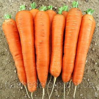 Семена моркови Джерада F1 25000 семян (калиброванные ˂1,6мм.) Rijk Zwaan