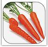 Семена моркови Каротан 50 грамм Rijk Zwaan
