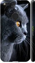 """Чехол на Google Pixel Красивый кот """"3038c-400-2448"""""""