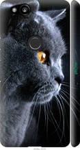 """Чехол на Google Pixel 2 Красивый кот """"3038c-1075-2448"""""""