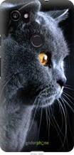 """Чехол на Google PixeL 2 XL Красивый кот """"3038u-1643-2448"""""""