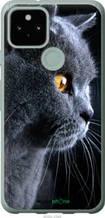 """Чехол на Google Pixel 5 Красивый кот """"3038u-2044-2448"""""""