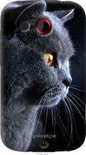 """Чехол на HTC Desire C A320e Красивый кот """"3038u-225-2448"""""""