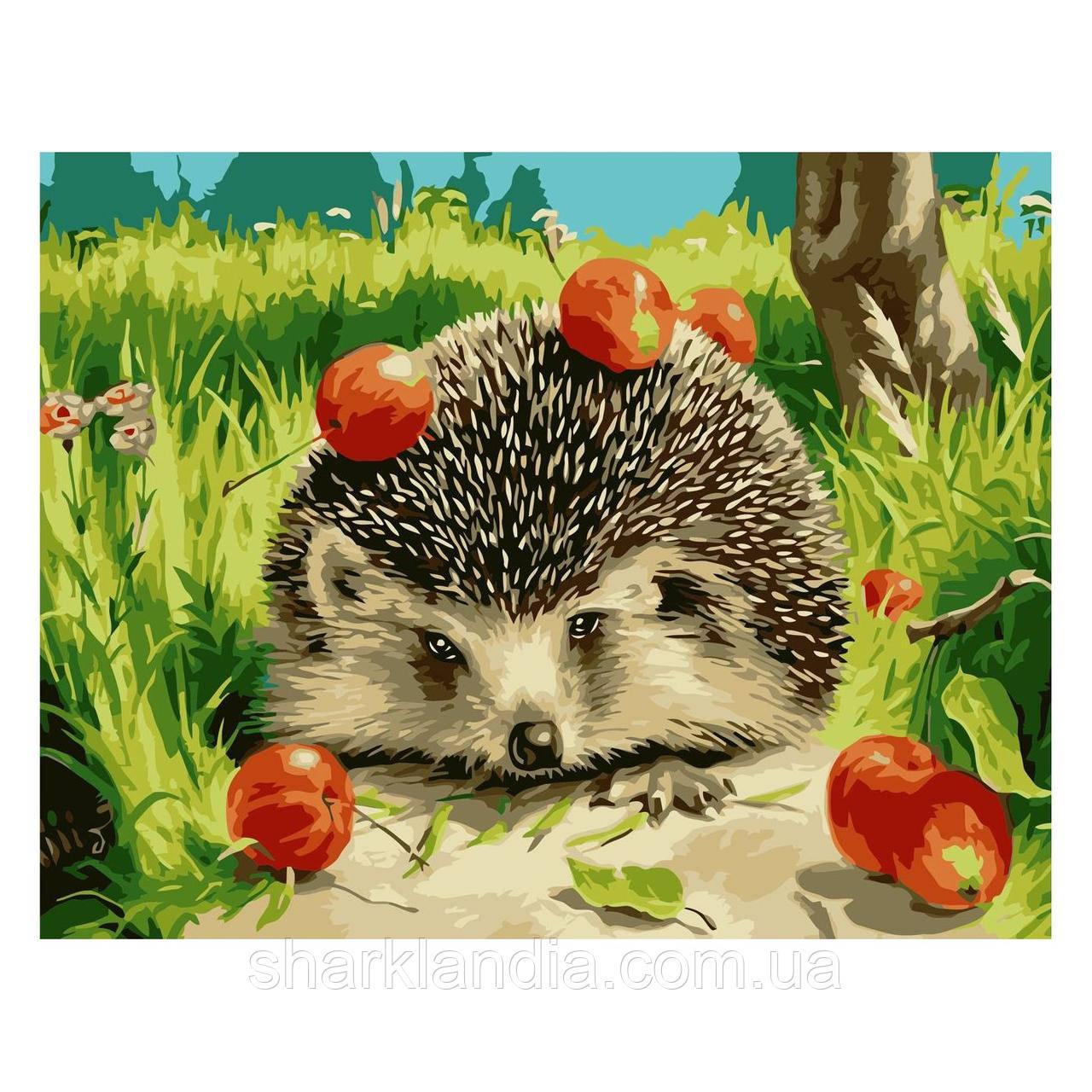Картина по номерам Ежик с яблоками 30х40 см Strateg Раскраски Еж Для начинающих