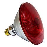 Інфрачервона лампа для обігріву PAR38 175 Вт Philips, фото 2