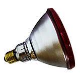 Інфрачервона лампа для обігріву PAR38 175 Вт Philips, фото 3