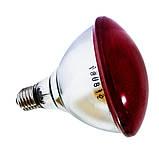 Інфрачервона лампа для обігріву PAR38 175 Вт InterHeat (Корея), фото 3