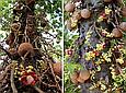 Бразильский орех очищенный  200г Бразилия,Натуральные без скорлупы  цельные органические  орехи бразильские, фото 2