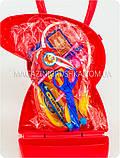Детский игровой набор «Чудо-аптечка Свинки Пеппы», фото 5