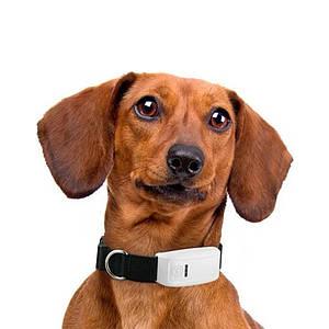 Ошейник с GPS-трекером TK-STAR TK-909 Black для кошек и собак влагостойкий IP65 Sim карта для охотньичих собак