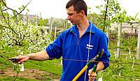 Профессиональная обрезка промышленных плодовых садов