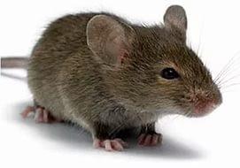 Родентициды (от мышей и крыс)