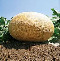 Высокоурожайный гибрид крупной дыни Амал F1, профессиональные семена для фермеров 1000 семян, Clause