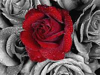 Набор алмазной вышивки/мозаики Роза 34х24 см WM4722