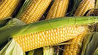 Семена кукурузы Солонянский 298