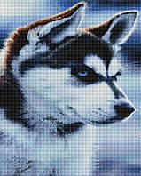 Алмазна мозаїка 40*50 Хаскі BrushMe