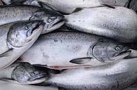 Как правильно разморозить рыбу?