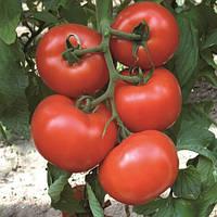 ДІАГРАМА F1 - насіння томату індетермінантного 500 насіння, Nunhems, фото 1
