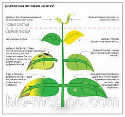Агроанализ растения