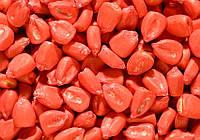 Отечественные семена кукурузы на силос Днепровський 257 СВ, простой гибрид (ФАО-290)