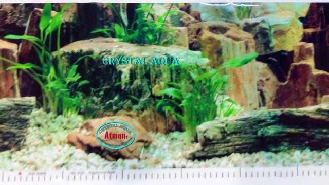 Фон для аквариума с высотой 30 см