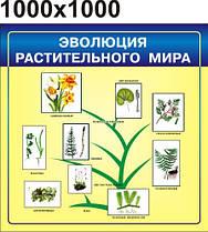 Эволюция растительного мира. Стенд для кабинета биологии