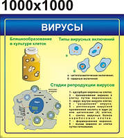 Вирусы. Стенд для кабинета биологии