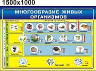Многообразие живых организмов. Стенд для кабинета биологии