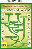 Эволюция животного мира. Стенд для кабинета биологии