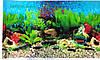 Фон №9011 для аквариума с высотой 50 см