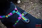 """Шлея KARELINE из нейлона с принтом """"Keeper"""", логотипом и пластиковой пряжкой 20 ммА:400-600 мм,В:500-630мм, фото 5"""