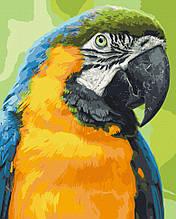 Картина по номерам  Попугай Ара 40х50 см 11643-AC Art Craft