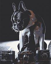 Картина по номерам  Застенчивый фотограф 40х50 см 11642-AC Art Craft