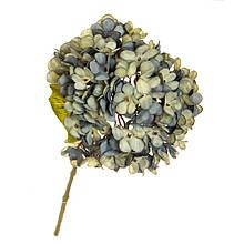"""Квіти """"Гортензія блакитна"""""""