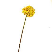 """Квітка Гортензія куляста"""" жовта"""