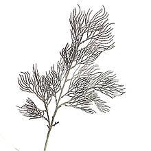 Ветка ивы волнистая темно-серая искусственная