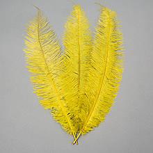 Страусове перо 55 см жовто-зелений