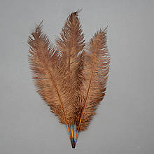 Страусове перо 55 см коричневий