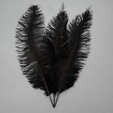 Страусиное перо 55 см Черный