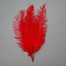 Страусиное перо 55 см красный