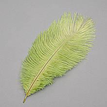 Страусиное перо 25-30 см зеленый