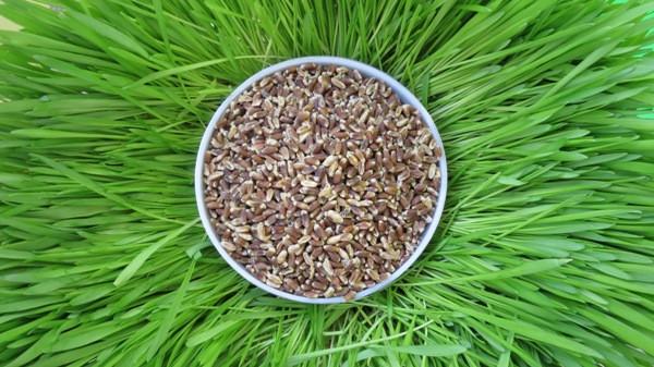Органика: пшеница, ячмень