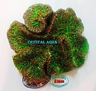 Актинии SH 090-2, коралл